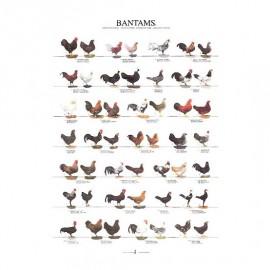 Livres sur les poules et poulaillers 2 ufs aviculture - Toutes les races de poules pondeuses ...
