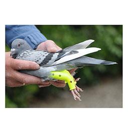 matériel pigeon oisellerie