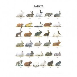 POSTER LAPINS 1 68X98