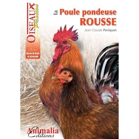 poule pondeuse rousse - animalia