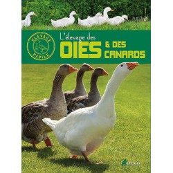 elevage-des-oies-et-canards-artemis
