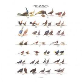 poster-faisans-1-68x98