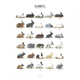 poster-lapins-2-68x98