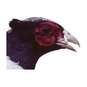 nouveau sommet acheter populaire large éventail Différents modèles d'anneau anti picage pour poule, faisan ...